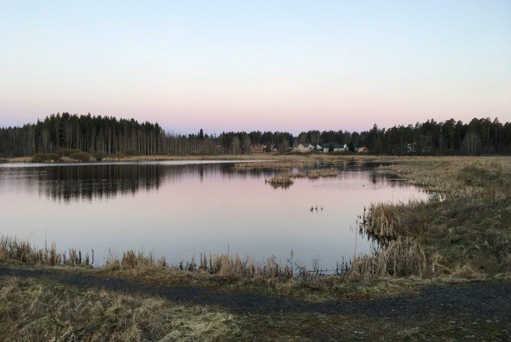 JÄRVELÄN KOSTEIKKO ON LINTUKEIDAS TURUN KESKUSTAN TUNTUMASSA
